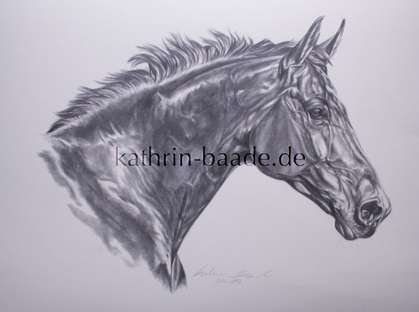 Bleistiftzeichnungen Archive Tierportraits Kathrin Baade De