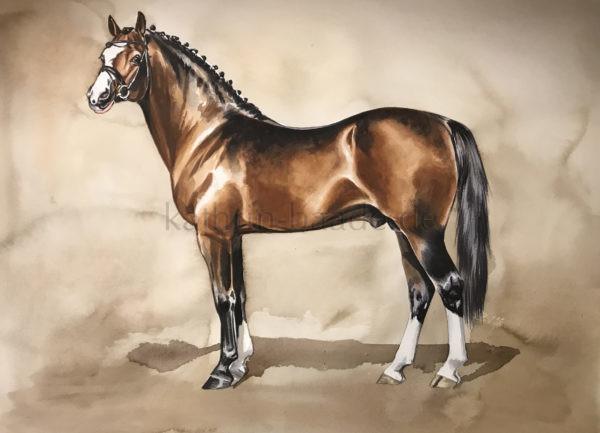 Ponyhengst vor klassischem Hintergrund, Pferd in Seitenaufstellung, gekörter Hengst, Brauner, Aquarell, watercolor